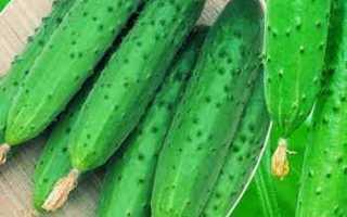 Огурец Олимпиада f1 – весенне-летний сорт, славящийся высокой продуктивностью и промышленным культивированием