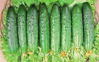 Огурец Макар f1 — особенности выращивания и советы садоводов