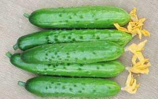 Огурцы Геракл f1 – партенокарпический гибридный сорт для остекленных и пленочных укрытий