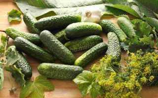 Огурцы Хрумка F1: характеристика и важные правила выращивания сорта