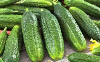 Огурцы Есаул f1: характеристика, правила выращивания, отзывы огородников
