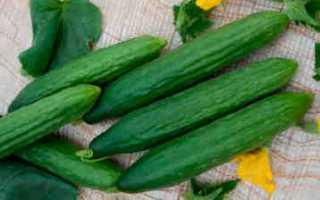 Огурцы Форвард f1: характеристика, правила выращивания, отзывы садоводов
