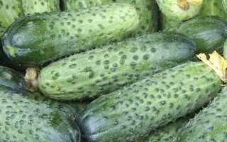 Огурец Аваланж F1: характеристики и правила получения хорошего урожая