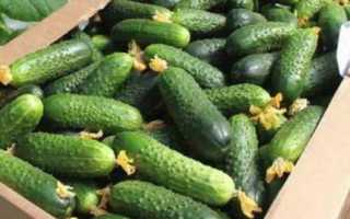 Огурцы Семкросс f1: описание и правила выращивания сорта
