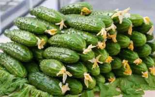 Огурцы Агростарт f1: характеристика, особенности, правила выращивания