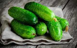 Огурцы Манеки: характеристика и правила выращивания сорта
