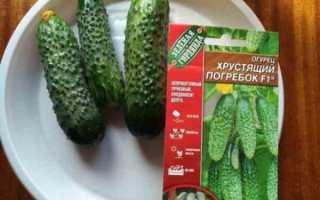 Огурцы Погребок f1 – сорт с привлекательными плодами для выращивания в промышленных объемах