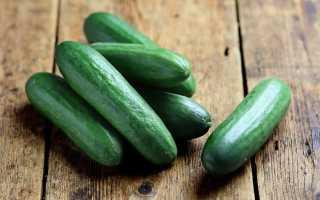 Огурец Саламандра F1: характеристика и правила выращивания сорта