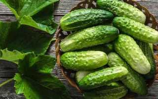 Огурцы Ерофей f1 – отличный гибрид, предназначенный для культивирования неопытными овощеводами