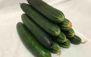 Огурцы Святогор F1 – высокопродуктивный сорт с бугорчатыми плодами средних размеров