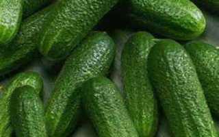Огурцы Барон f1: характеристика, важные правила выращивания, отзывы садоводов