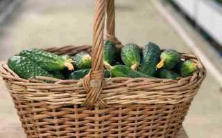 Огурцы Сибирский скороход f1: описание зеленцев с прекрасным вкусом