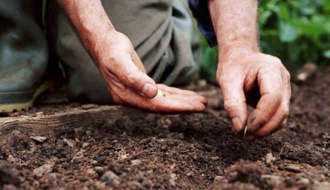 Посадка семян огурцов