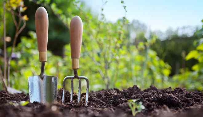 Ваш огород