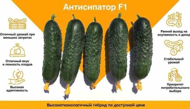 Огурец Антисипатор f1