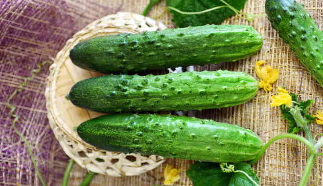 Урожай огурцов Прагматик