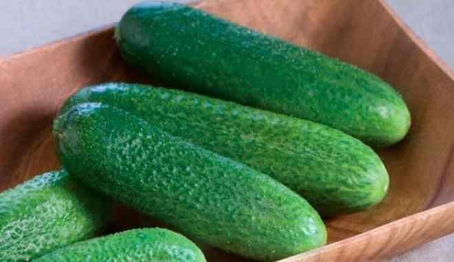 Урожай сорта огурцов Чебоксарец